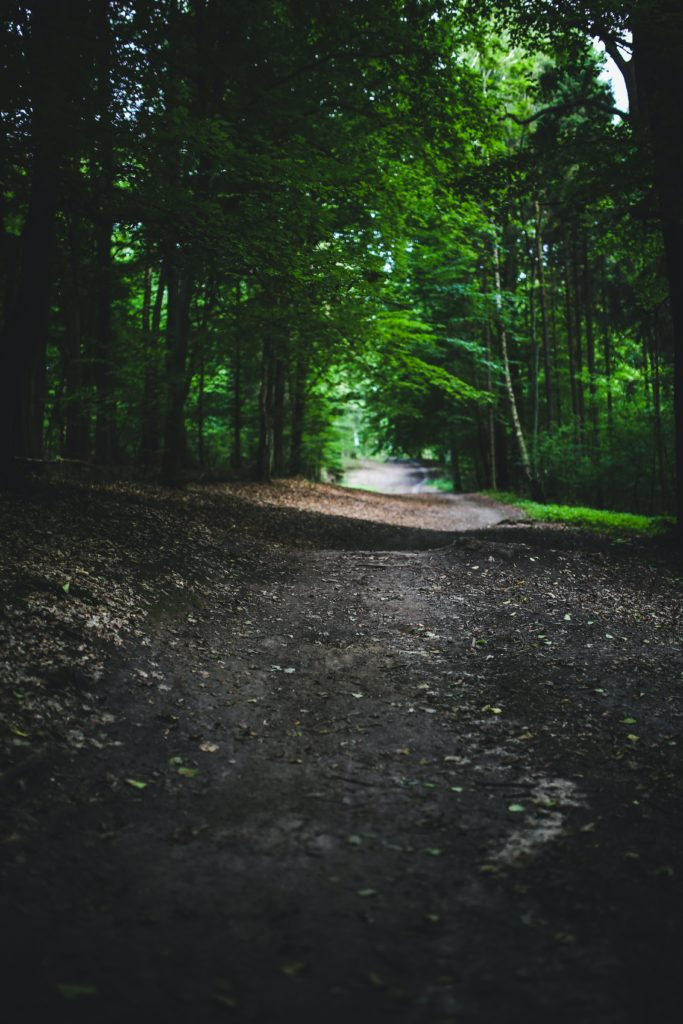 Courir dans les bois