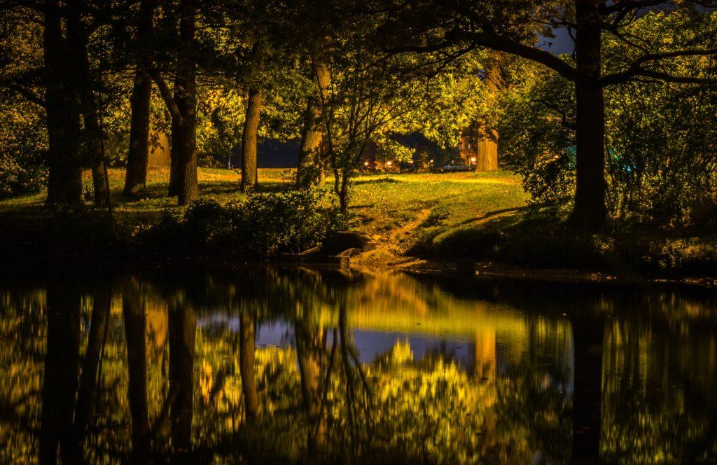 Courir dans les bois la nuit
